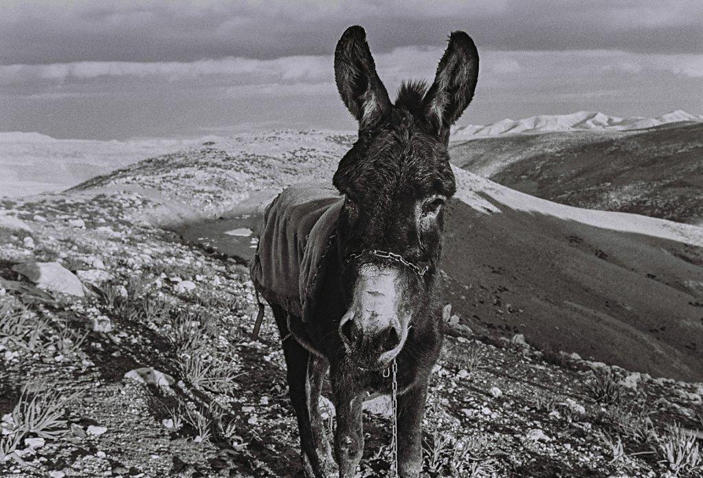 Wueste Negev, Israel (Portrait, Reportage, on location, redaktionell)